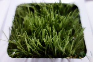 forgarden-03-05