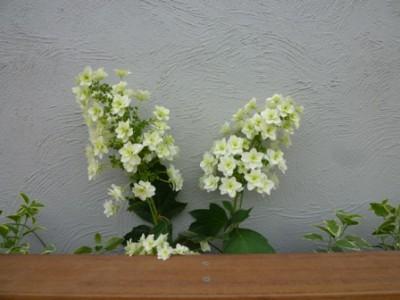 forgarden-07-02